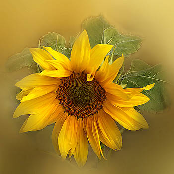 Last Years Sunflower by TnBackroadsPhotos