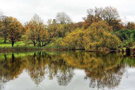 Late Autumn Reflections 2 - Somerset by Susie Peek