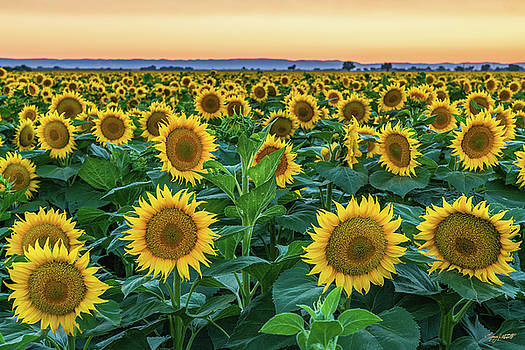 Late Bloomer by Greg Mitchell Photography