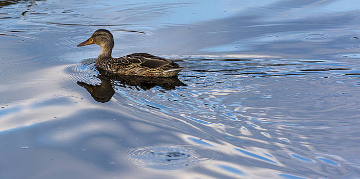 Late Day Swim by Focus On Nature Photography