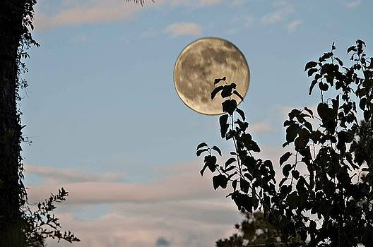 Late evening moon by Bill Perry