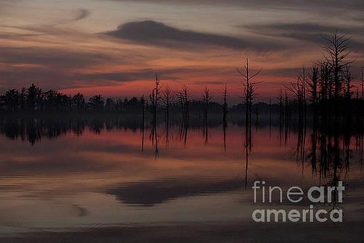 Larry Braun - Late Evening Swamp