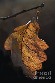 Late fall leaf by Jim Wright