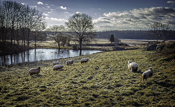 Late Fall Pastoral by Gary Shepard