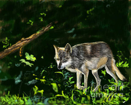Late October Wolf by Barb Kirpluk