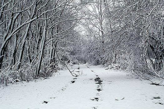 Late Snow Fall by Amanda Kiplinger