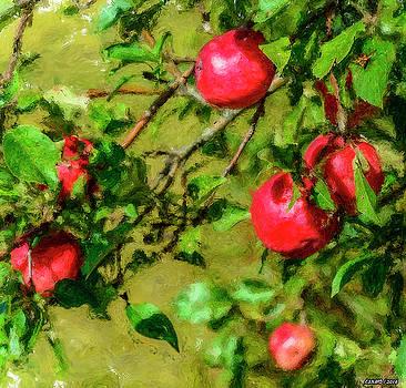 Late Summer Apples by Ken Morris