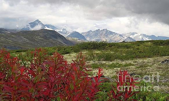 Harriet Peck Taylor - Late Summer in the Yukon