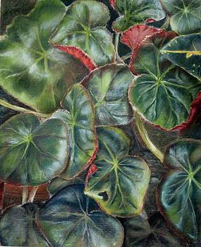 Laura's Begonia by Karen Boudreaux