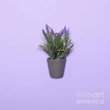 Lavander in vase - Top view by Aleksandar Mijatovic