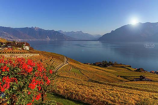 Elenarts - Elena Duvernay photo - Lavaux region, Vaud, Switzerland