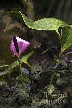 Lavendar Anthurium by Bill Baer