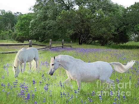 Lavender Pastures by Melinda Hughes-Berland