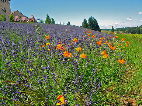Lavender and Poppys by PJ  Cloud
