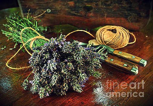 Lavender by Binka Kirova
