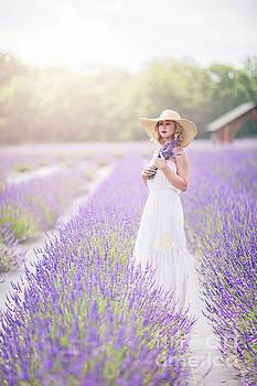 Lavender Dreams by Evelina Kremsdorf