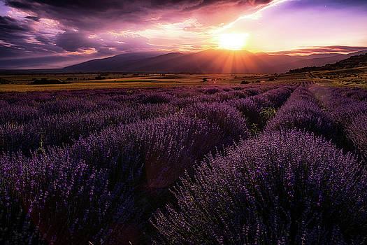 Lavender field at sunset by Plamen Petkov