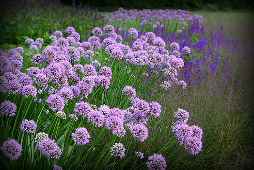 Lavender Field by Linda Mishler
