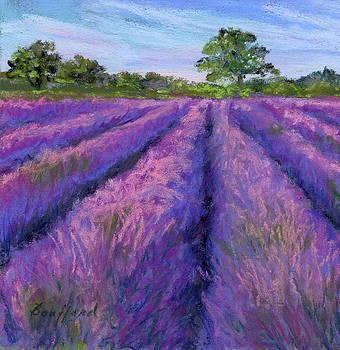 Lavender Field by Vikki Bouffard