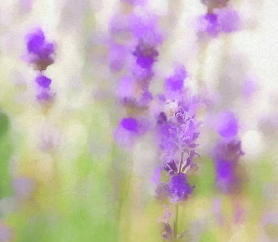 Lavender Fields Forever by Andrea Kollo