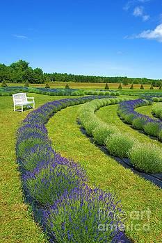 Lavender Fields Forever by Brigitte Emme