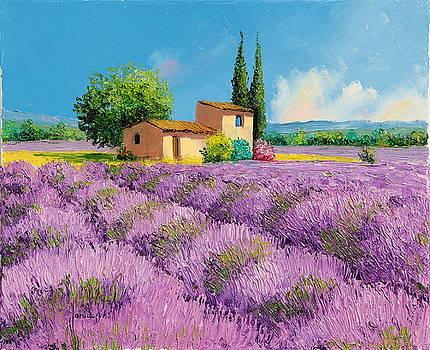 Lavender fields in Provence by Jean-Marc JANIACZYK