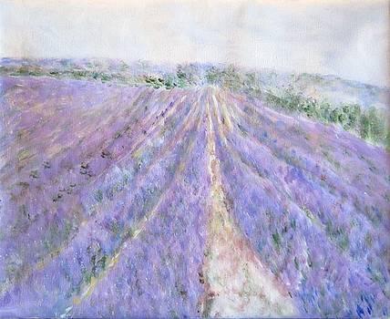 Lavender Fields Provence-France by Glenda Crigger