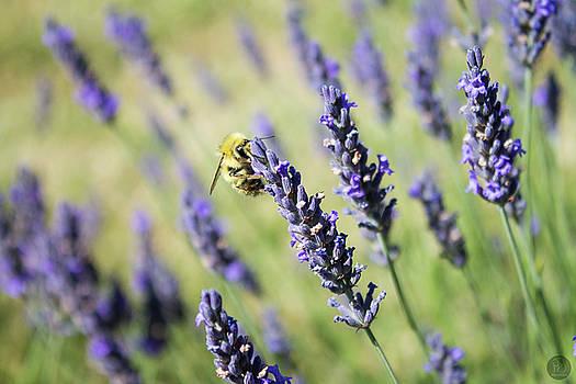 Lavender Honey Bee by Audrey Elisabeth