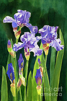Lavender Irises and Buds with Background by Sharon Freeman