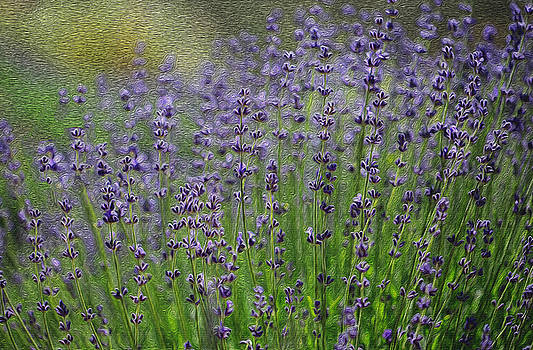 Lavender by Jessica Nguyen
