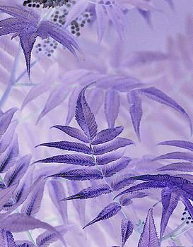 Sandra Foster - Lavender Leaves