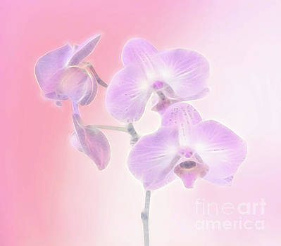 Lavender Pink Floral Group by Linda Phelps
