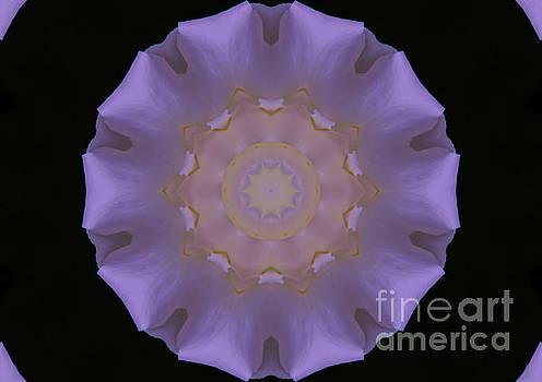 Lavender Pinwheel by Marilyn Carlyle Greiner