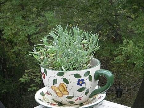Lavender Plant by Deborah Finley