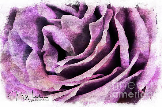 Lavender Rose Closeup by Norma Warden