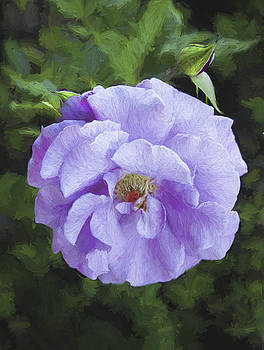Jan Hagan - Lavender Rose
