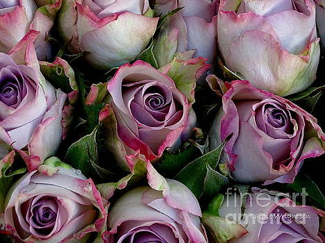 Lavender Roses by Lainie Wrightson