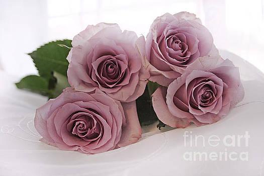 Lavender Roses by Lynn Jackson