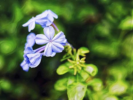 Lavender Stars by Doctor MEHTA
