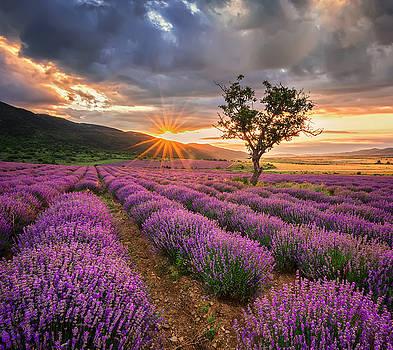 Lavender sunrise by Evgeni Ivanov