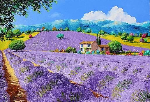 Lavenders under sunshine by Jean-Marc JANIACZYK