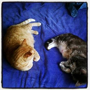 Lazy Afternoon Aka Tabby Nap by Tammy Winand