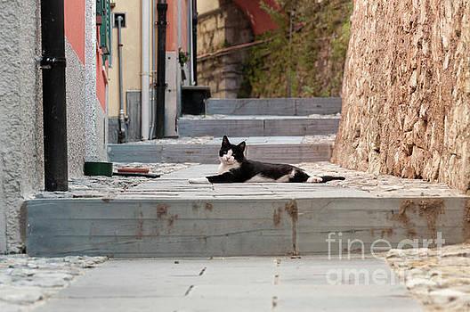 Lazy Cat by Leonardo Fanini