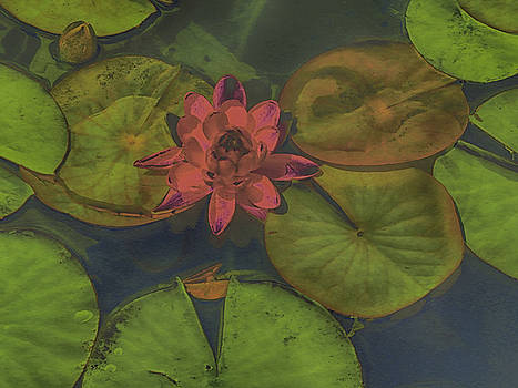 Lazy Day at the Lily Pond by Bobbie Barth