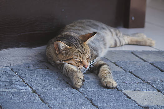 Lazy day by Yekaterina Grigoryeva