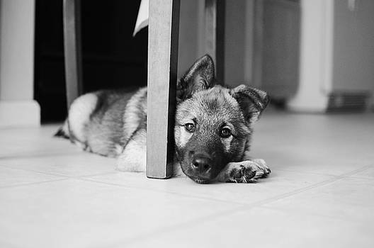 Lazy Elkhound by Lars C