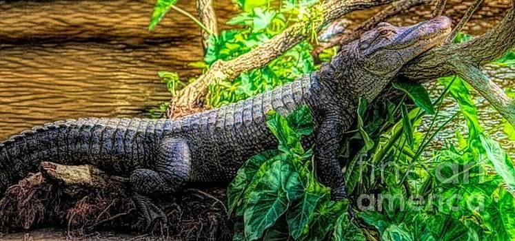 Paulette Thomas - Lazy Gator