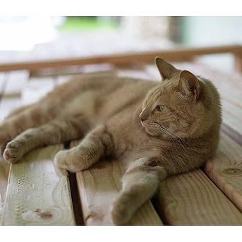 lazy Saturday #nikon by Allen Solomon