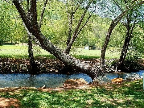 Lazy Tree by Glenda Barrett