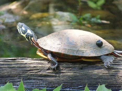 Lazy turtle in the sun  by Scott Welton